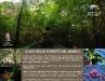 Il 40% delle foreste del mondo