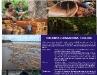 Chi abita l'Amazzonia: i Coloni