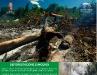 Deforestazione e incendi